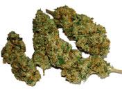 Dried Marijuana Buds